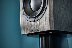 DYNAUDIO Special Forty close-up Grey Birch